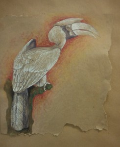 Toucan, crayon blanc et pastel sec sur papier recyclé
