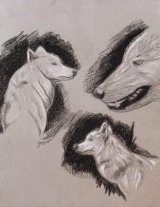 Têtes de loup réalisées au crayon pierre noire et crayon blanc sur papier gris